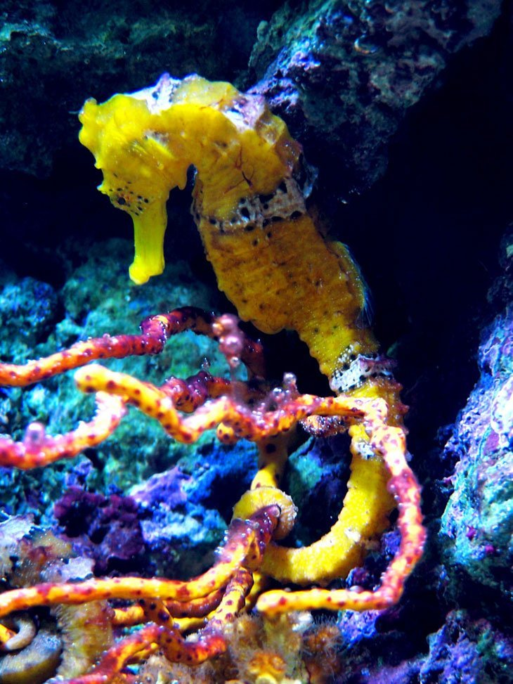 seahorse A Few Favourite Creatures