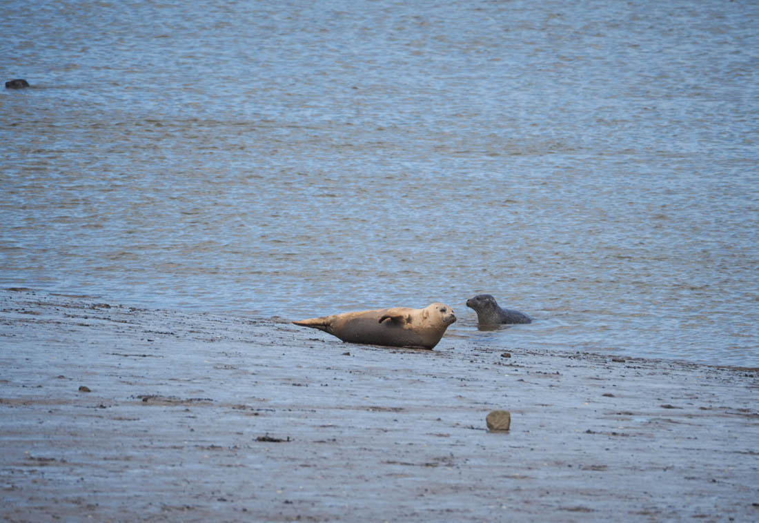 seal-sands-5 The Seals of Seal Sands, Teesside
