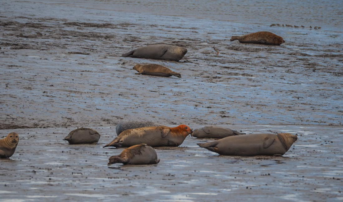 seal-sands The Seals of Seal Sands, Teesside
