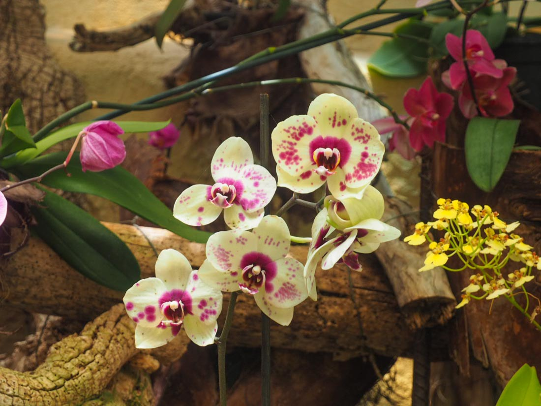 sitio-litre-10 Sitio Litre - The Orchid Garden of Tenerife