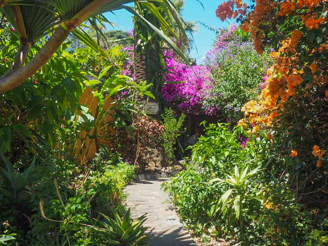 sitio-litre-2 Sitio Litre - The Orchid Garden of Tenerife