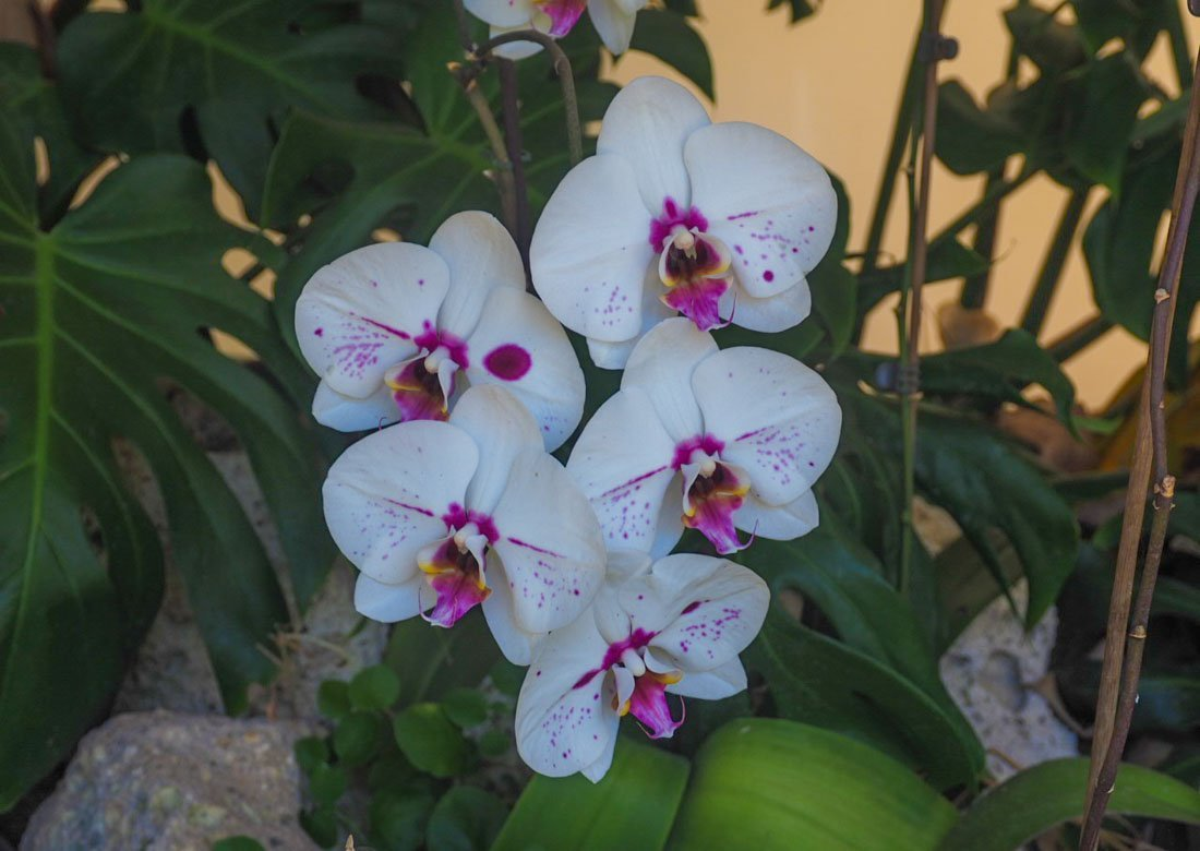 sitio-litre-7 Sitio Litre - The Orchid Garden of Tenerife