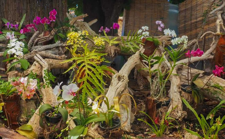 Sitio Litre - The Orchid Garden of Tenerife