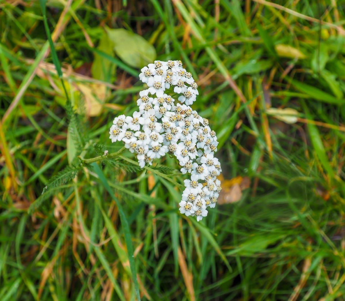slitt-wood-walk-3 Durham Dales: A Walk Through Slitt Wood