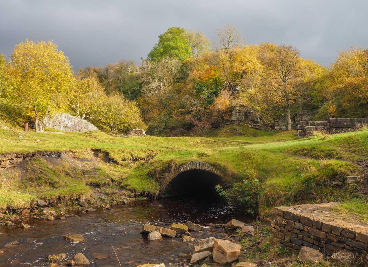 slitt-wood-walk-4 Durham Dales: A Walk Through Slitt Wood