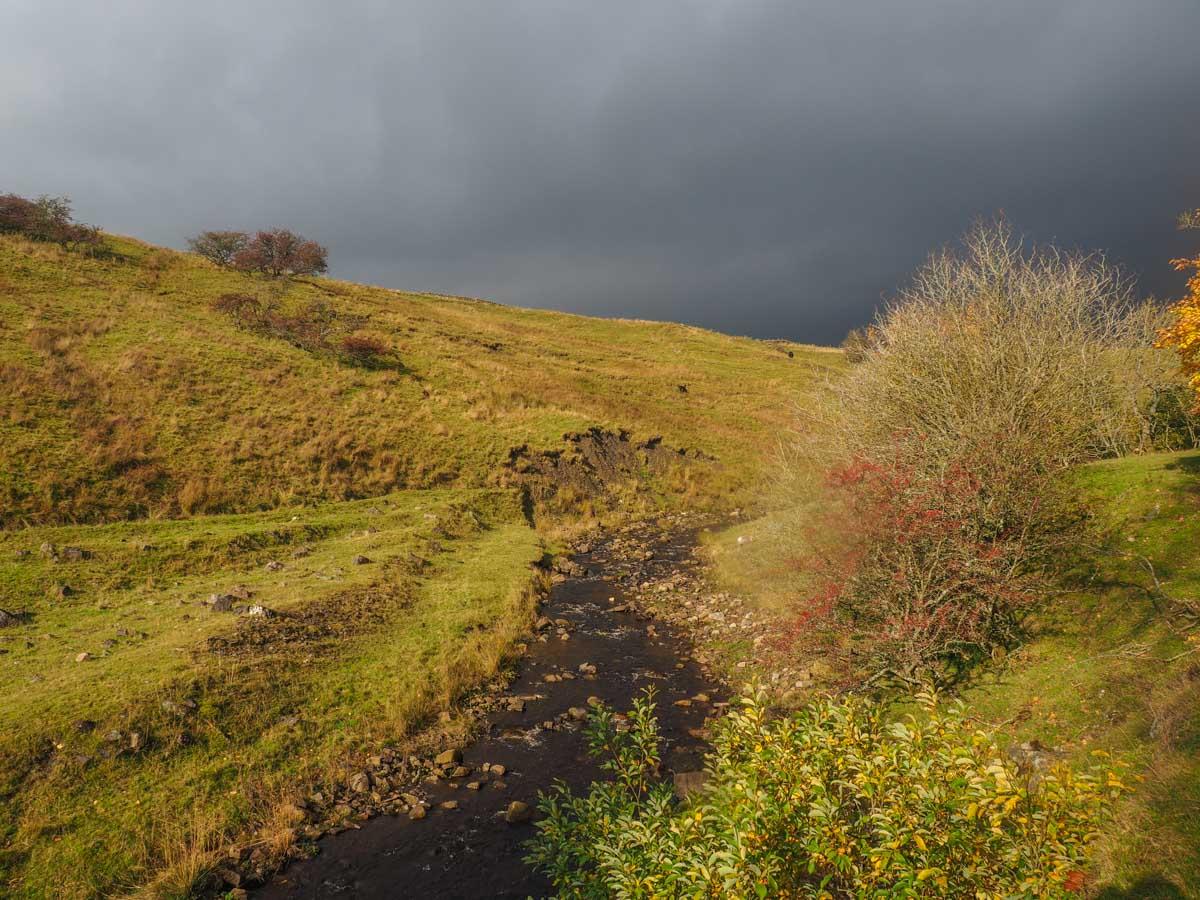 slitt-wood-walk-5 Durham Dales: A Walk Through Slitt Wood