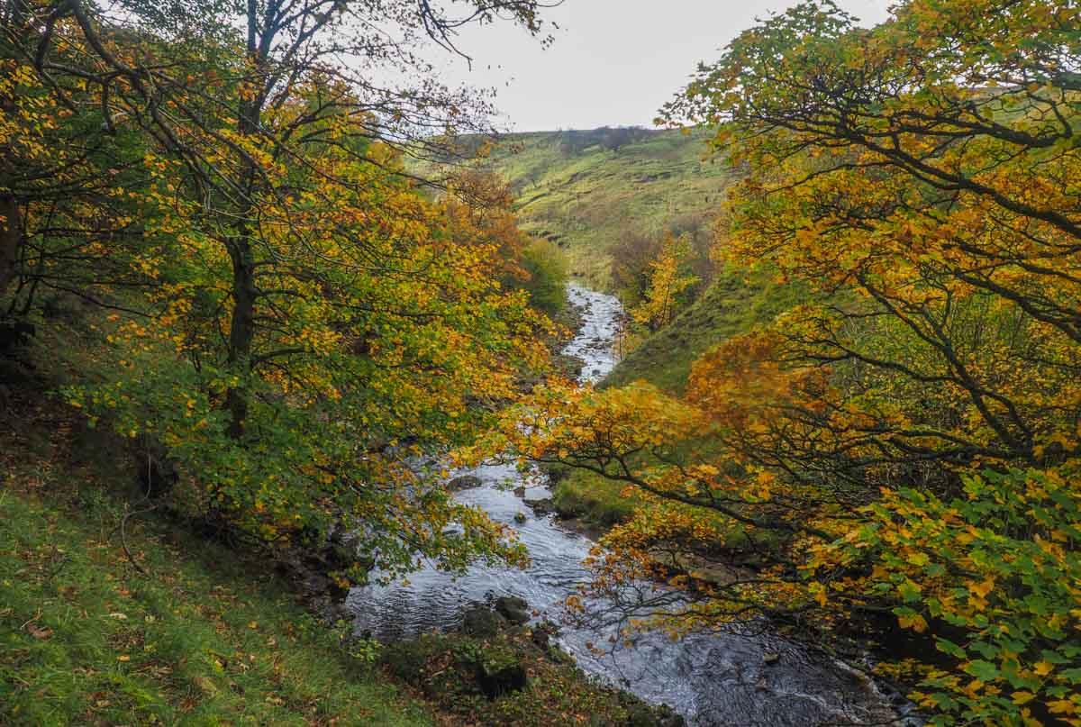 slitt-wood-walk-6 Durham Dales: A Walk Through Slitt Wood