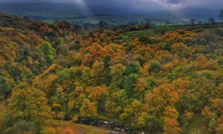 Durham Dales: A Walk Through Slitt Wood