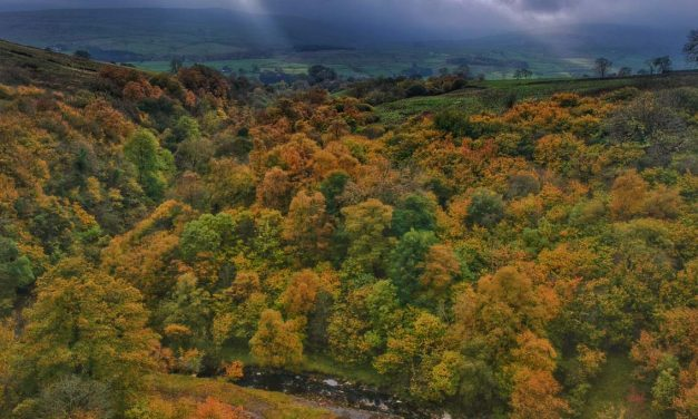 Durham Dales: A Walk Through Slitt Wood