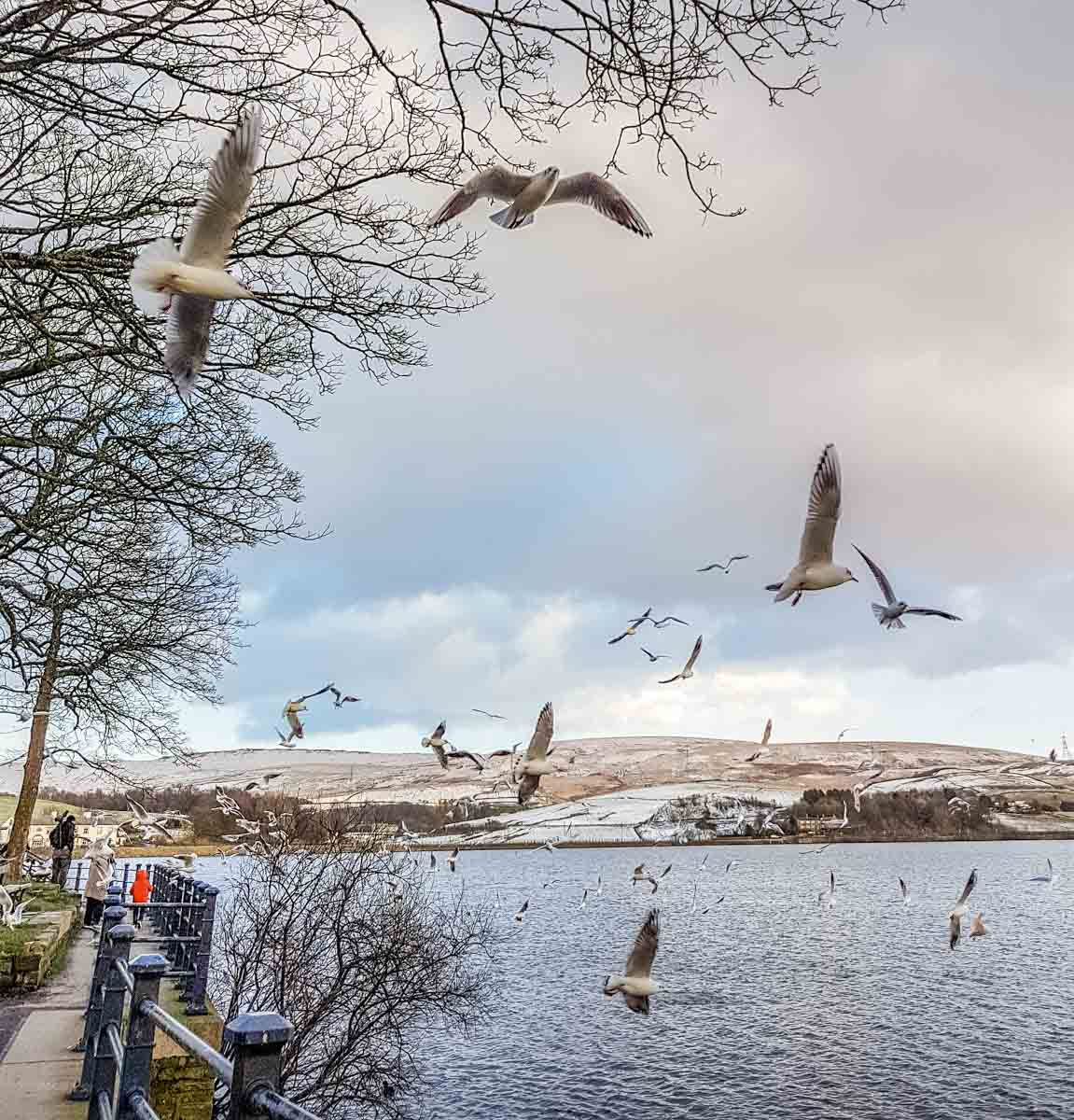 Hollingworth Lake, Rochdale - A Wintry Walk Around A Local Gem