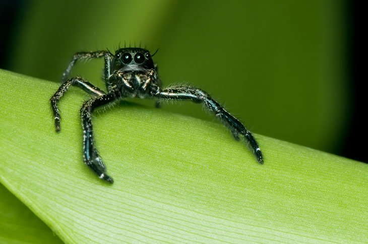 spider Animals Living The High Life in Altitude