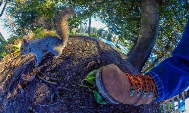 Squirrels and Birds Around Museum Gardens York