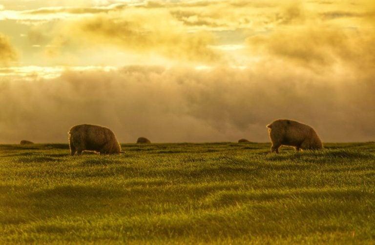 Sunrises Above West Yorkshire