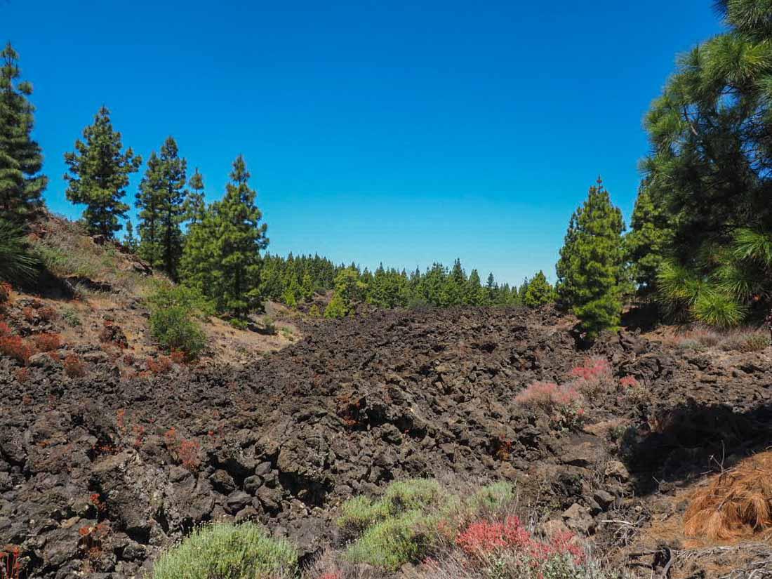 tenerife-hike-3-2 Walking Tenerife - Across the Volcanic Ash of Chinyero Volcano