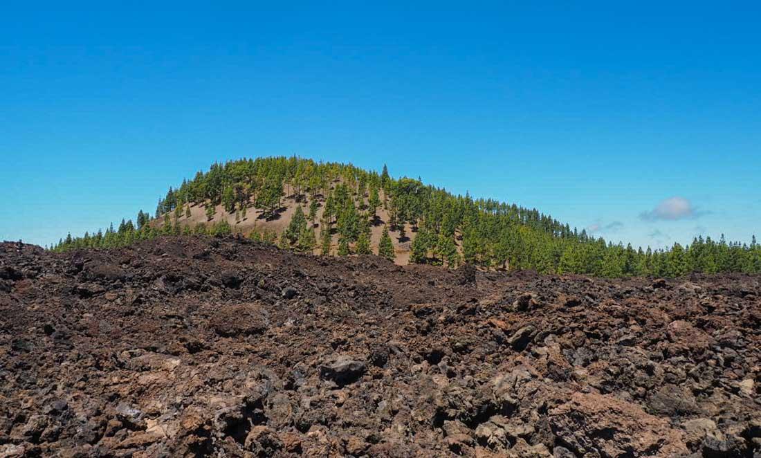 tenerife-hike-3-4 Walking Tenerife - Across the Volcanic Ash of Chinyero Volcano