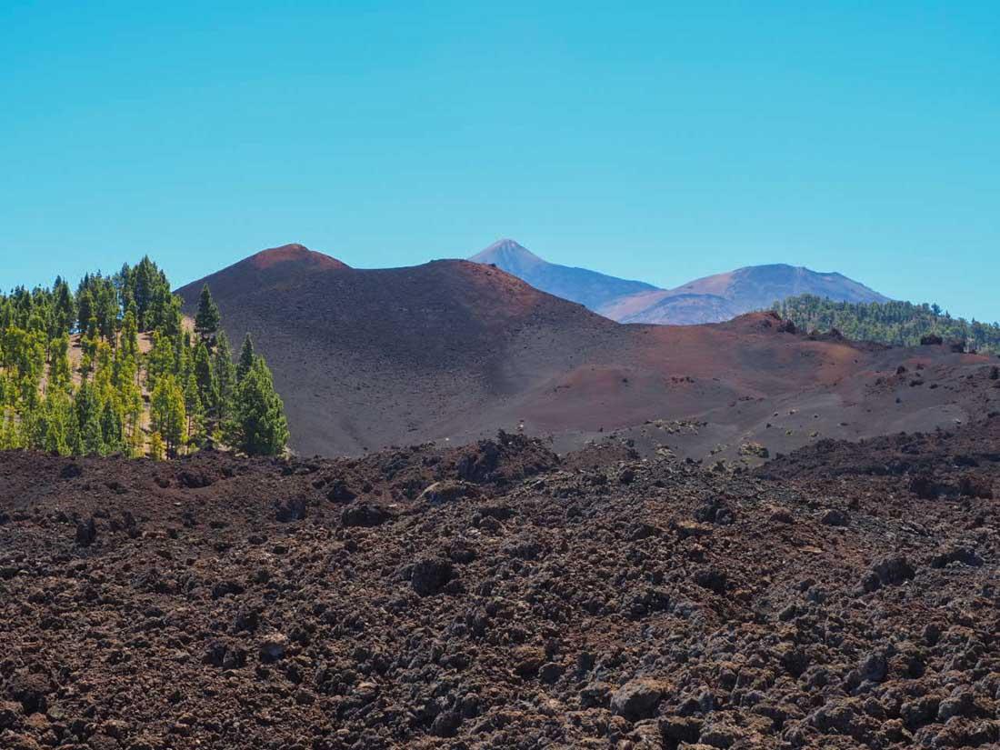 tenerife-hike-3-5 Walking Tenerife - Across the Volcanic Ash of Chinyero Volcano