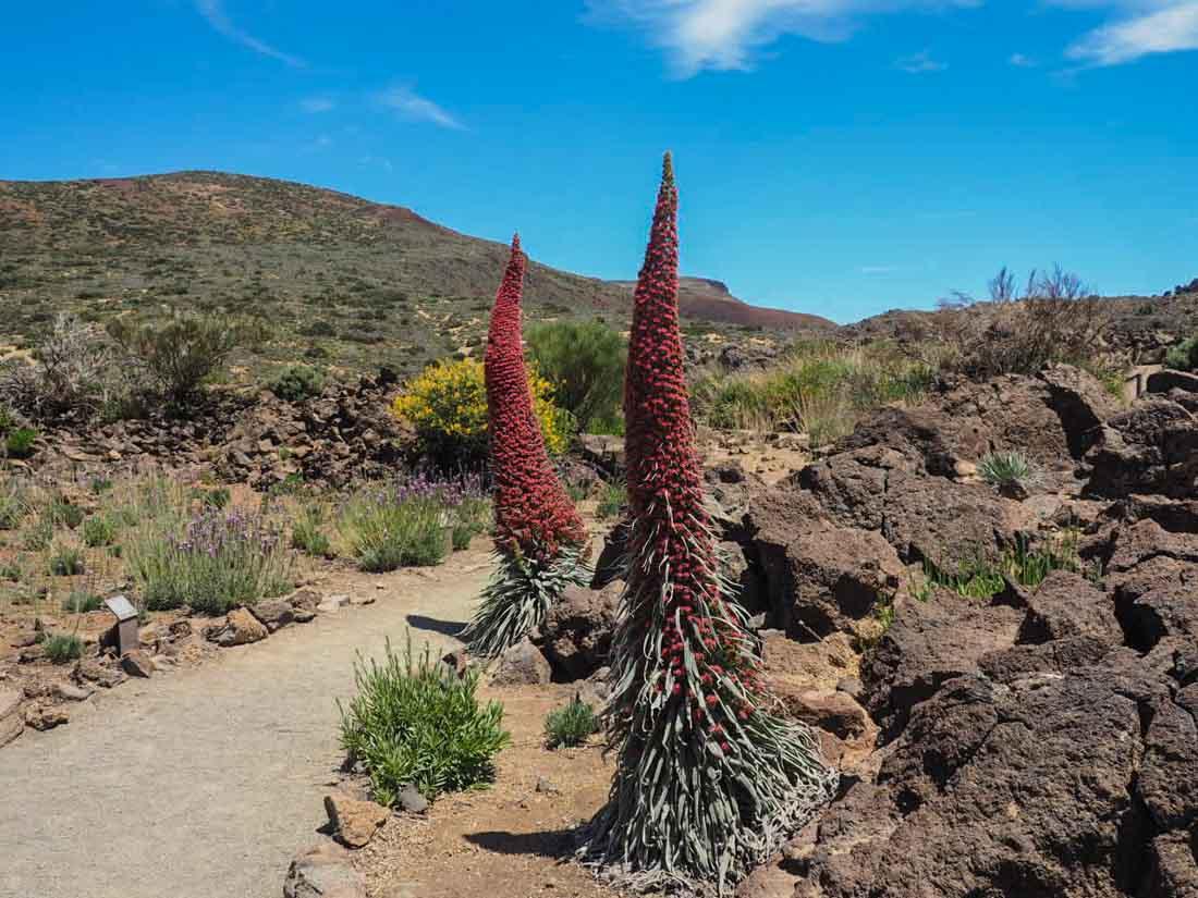 tenerife-walk-2-11 Walking Tenerife - Montaña Blanca to El Portillo
