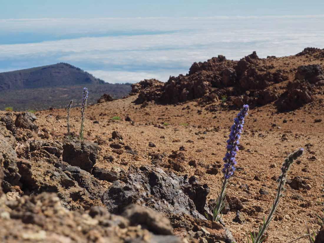 tenerife-walk-2-3 Walking Tenerife - Montaña Blanca to El Portillo