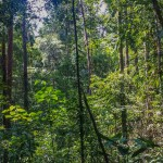 Discovering Tropical Rainforests