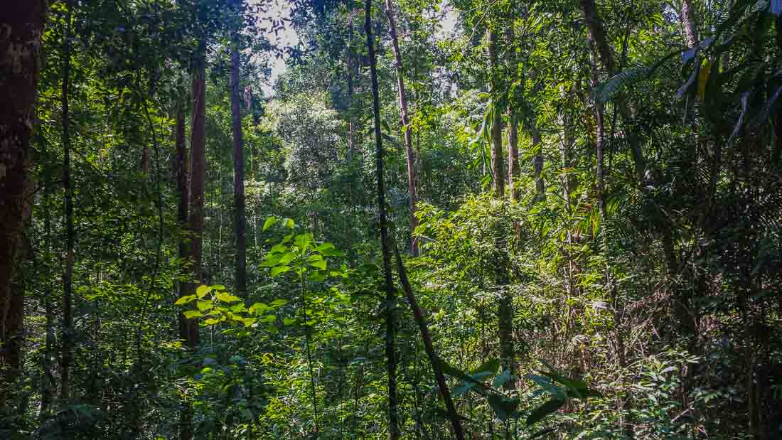 Discovering Tropical Rainforests 1