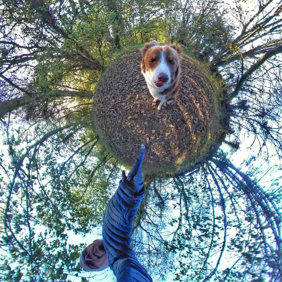 walk-border-collie-4 Walks In 360 Degrees With Rusty