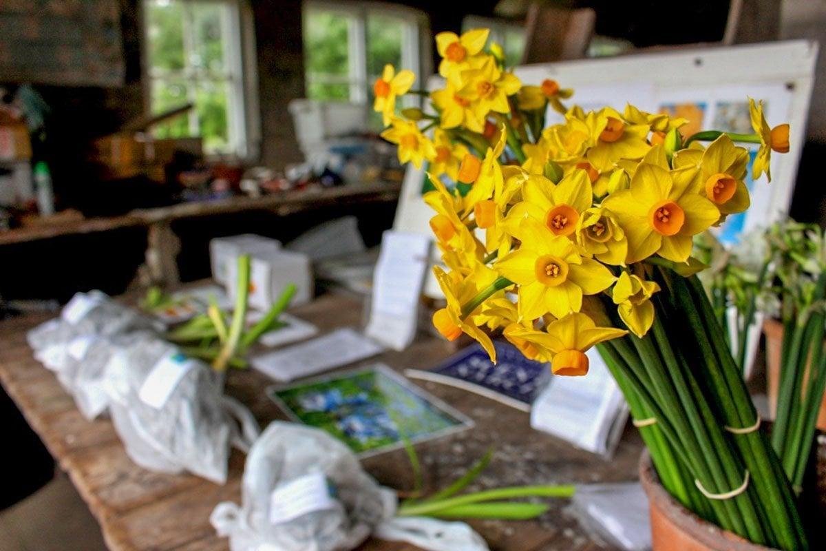 daffodils in shop