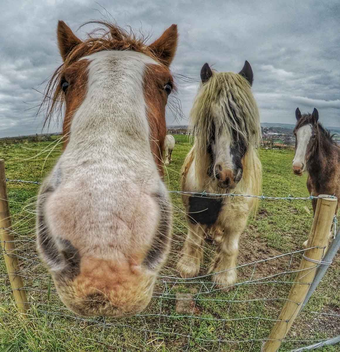 horses at whitby abbey