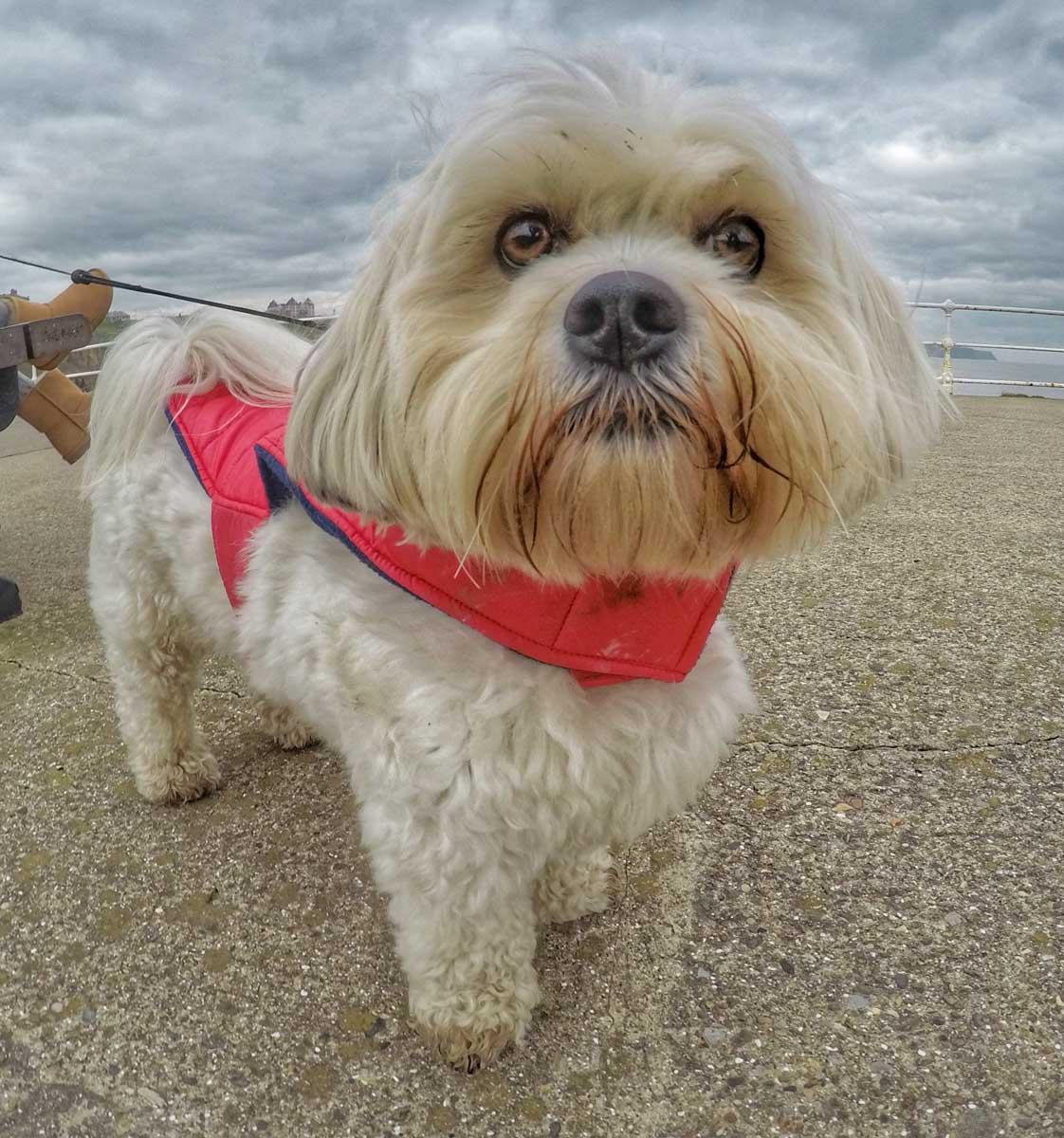 dog enjoying a walk
