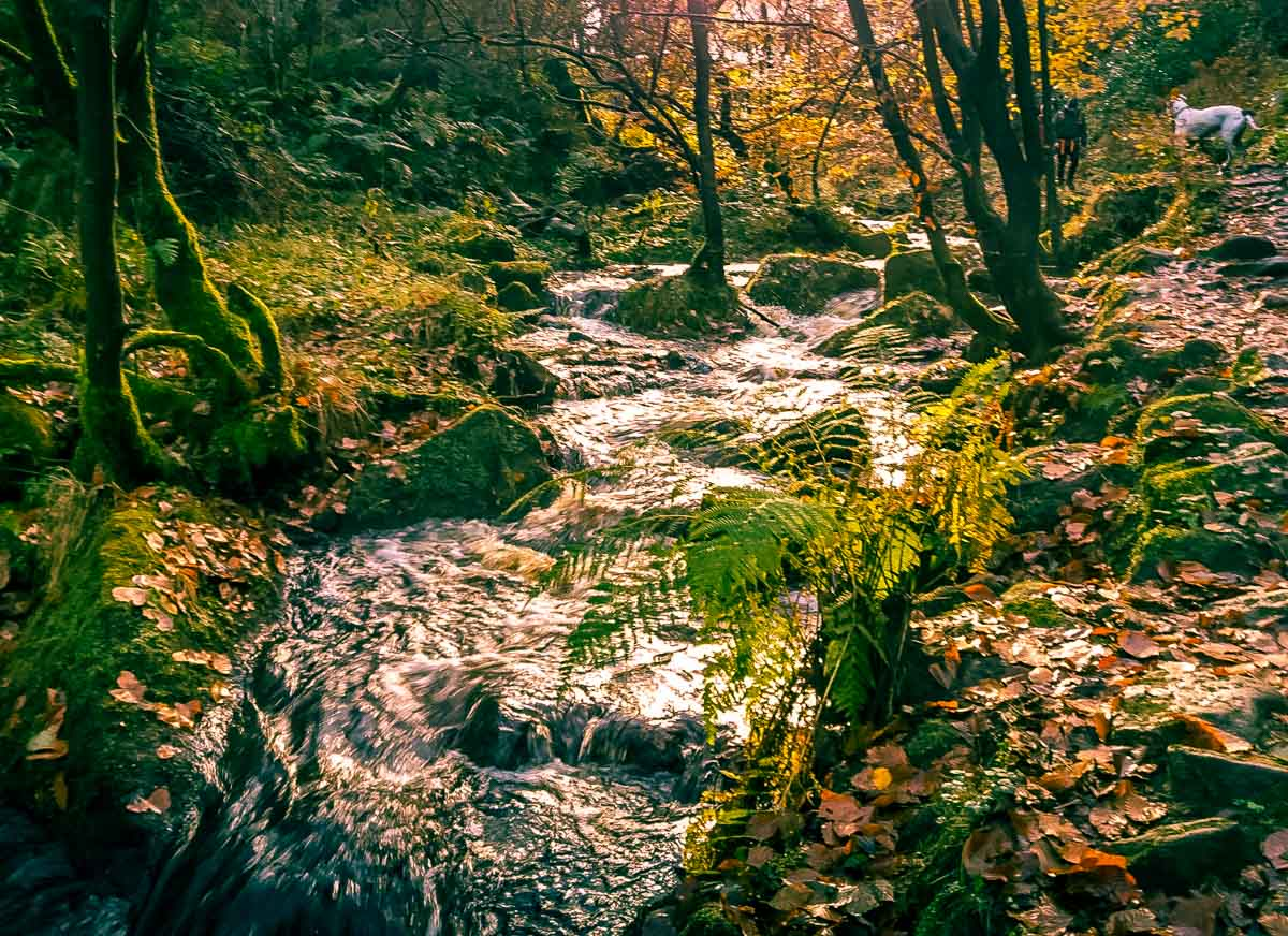 Walks Through Wyming Brook Nature Reserve – Hidden Wilderness 12