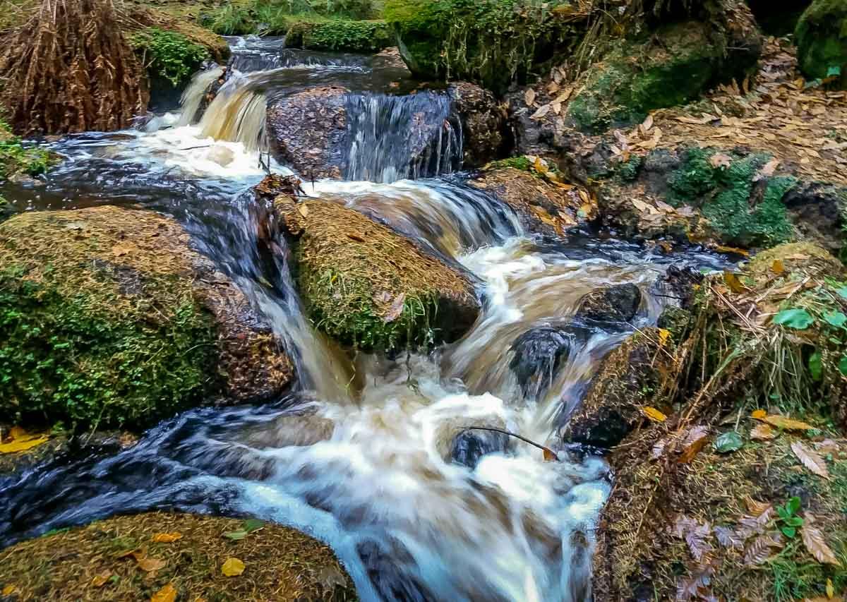 Walks Through Wyming Brook Nature Reserve – Hidden Wilderness 8