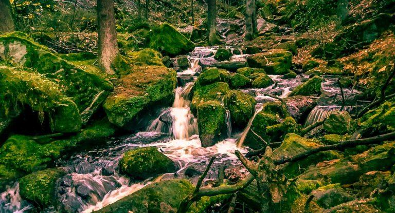 Walks Through Wyming Brook Nature Reserve – Hidden Wilderness