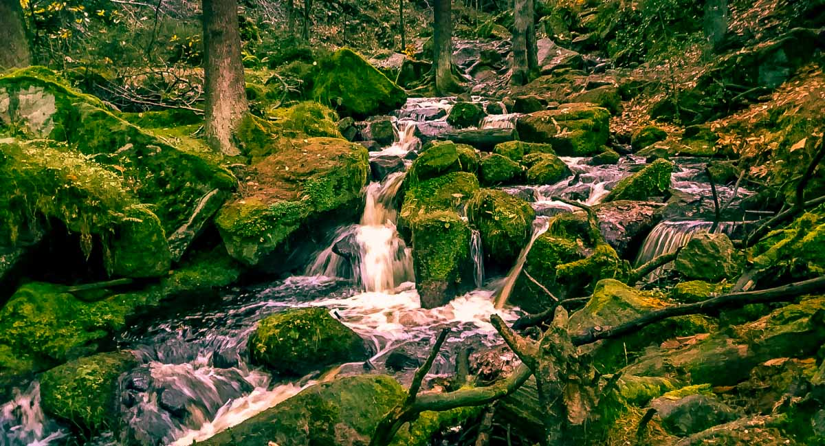 Walks Through Wyming Brook Nature Reserve – Hidden Wilderness 1