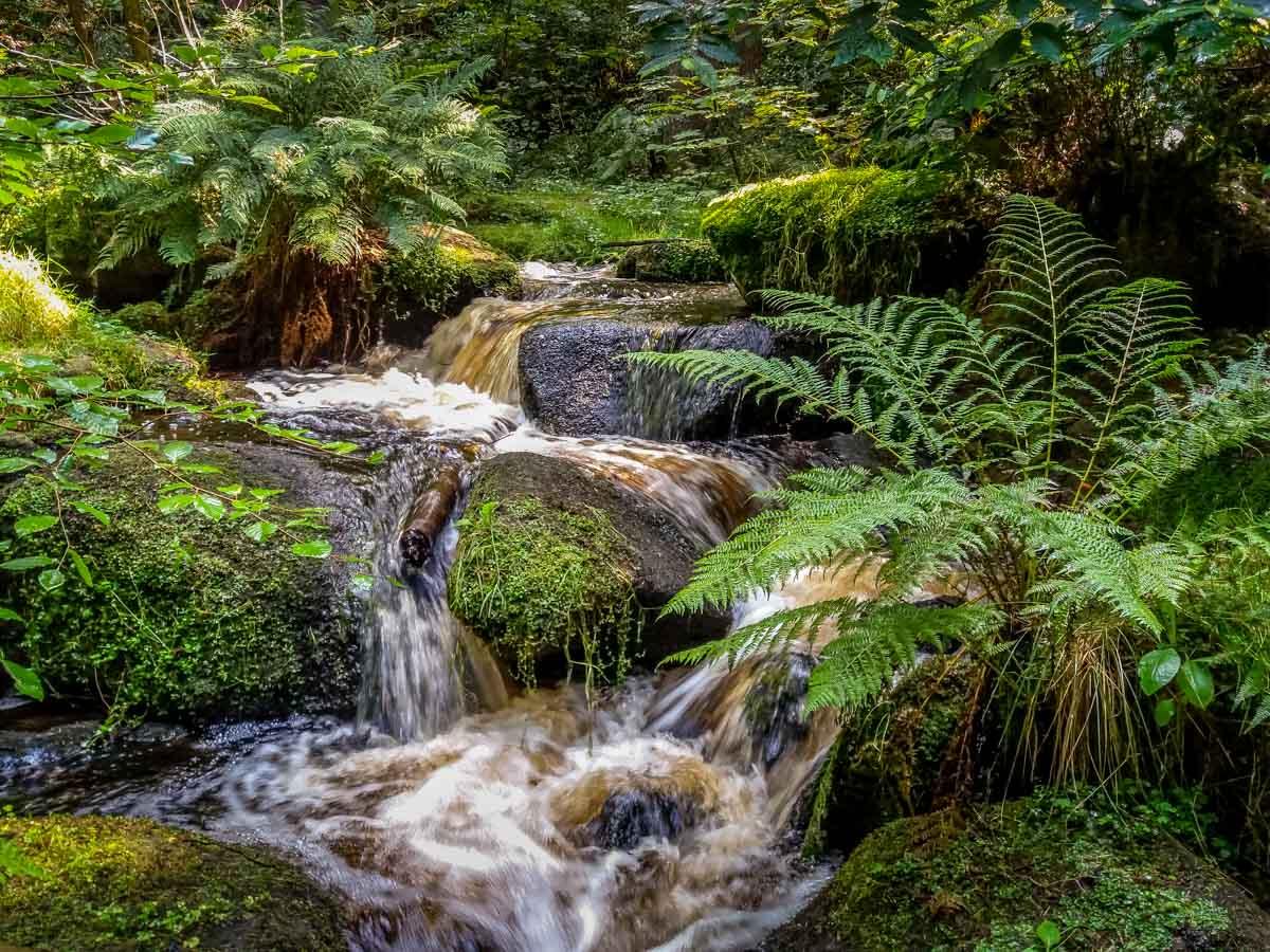 Walks Through Wyming Brook Nature Reserve – Hidden Wilderness 4