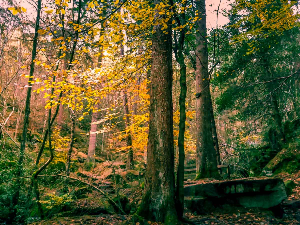 Walks Through Wyming Brook Nature Reserve – Hidden Wilderness 3