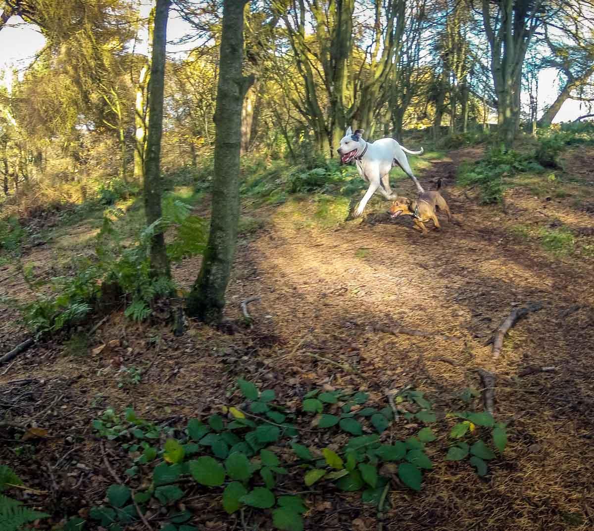 Walks Through Wyming Brook Nature Reserve – Hidden Wilderness 5