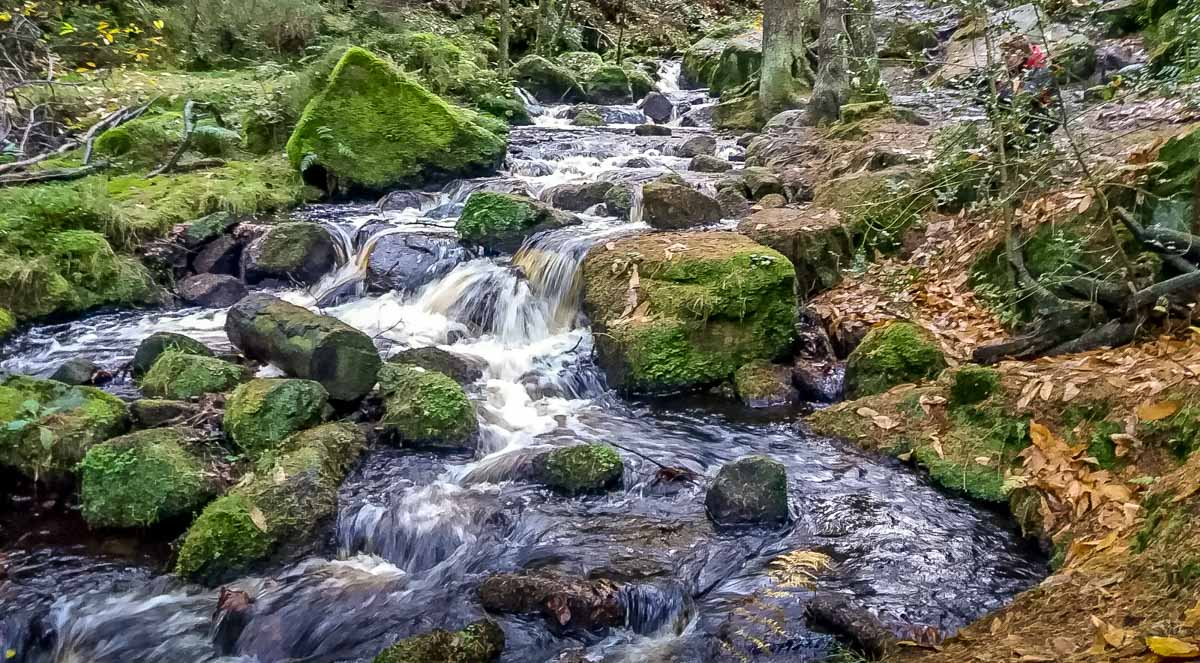Walks Through Wyming Brook Nature Reserve – Hidden Wilderness 10