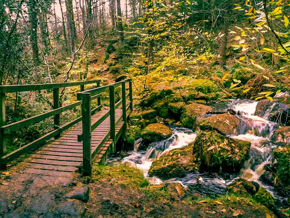 Walks Through Wyming Brook Nature Reserve – Hidden Wilderness 7